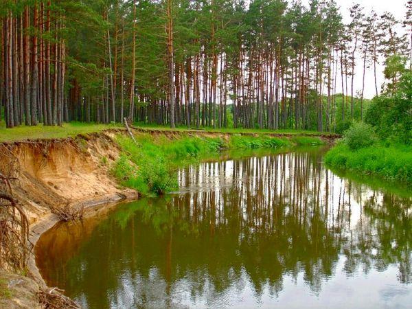 Река Друть у 3го км дороги от Белынич к деревне Мельник. Царство стрекоз.