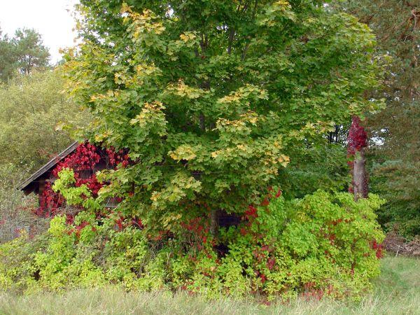 Осень в Мяльнике