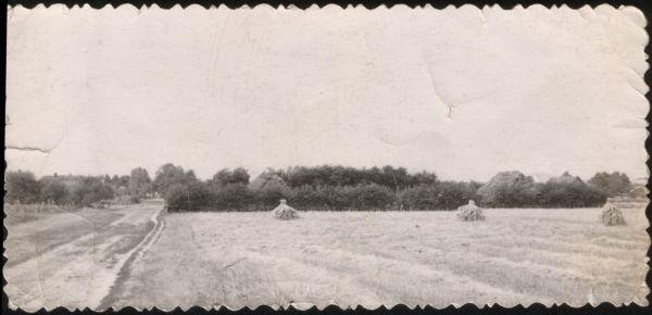 Ляхчыцы 1950 гады