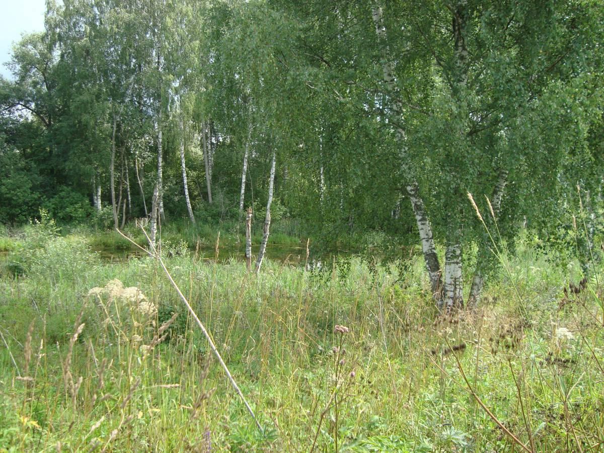 деревня Жуково 1 , вид на святой источник Праскевы Пятницв из далека