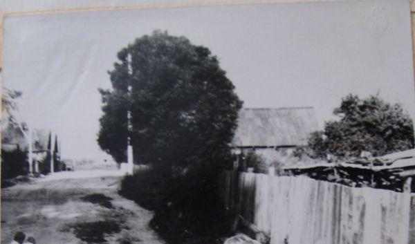 д. Знаменка 1990-е годы