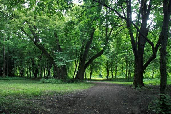 Altana w parku tuhanowickim (04/07/2009)