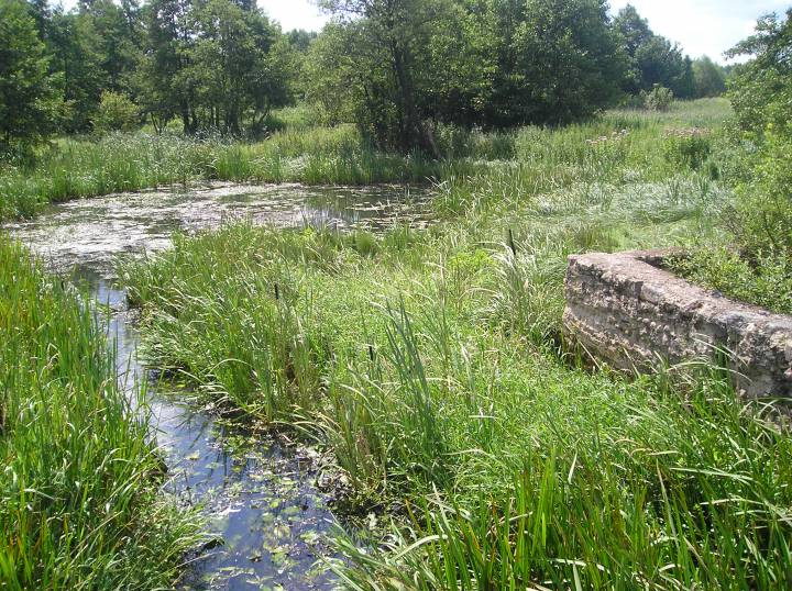 фундамент мельницы и заросшее озеро д.Горбачи ранее Левшово