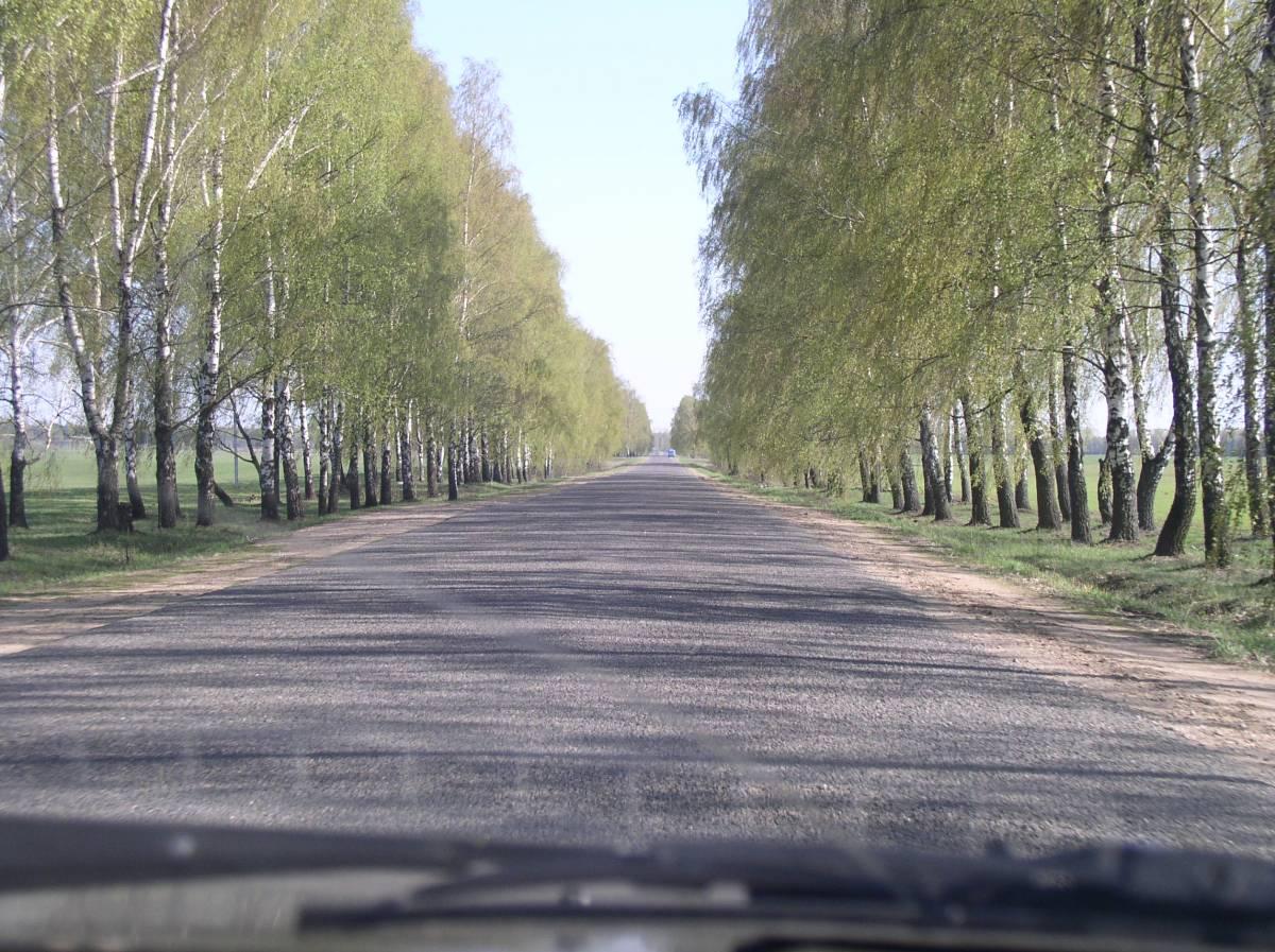 Выгляд шляху з Заполля да Рагачова. Зараз усе бярозы выразалі і пакінулі галечу.