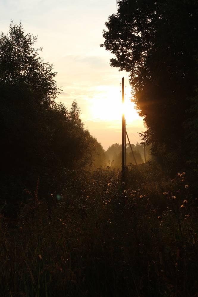 Главная дорога давно густо заросла травой и кустарником.
