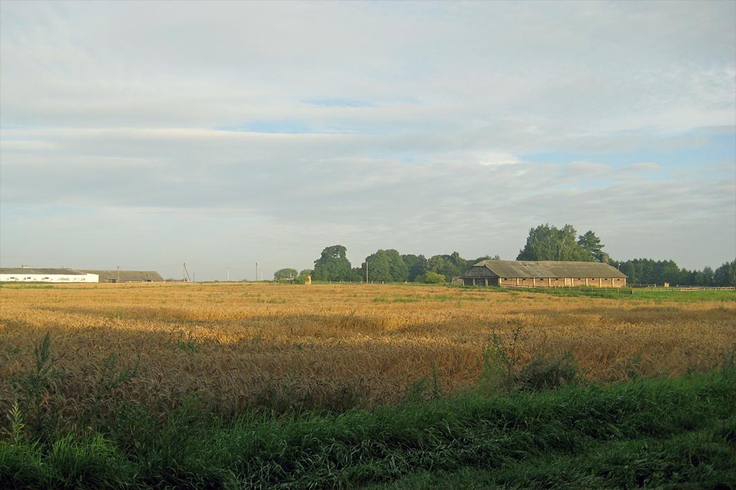 Колхозная конюшня советских времен на месте владений помещика Девчупольского справа. Слева - длинный белый телятник примерно 1990-х гг. строительства.